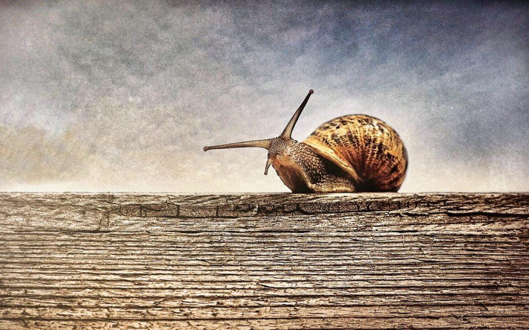 Speed Update – jak szybka jest Twoja strona?